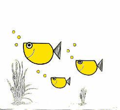 club der aquarienfreunde nürtingen