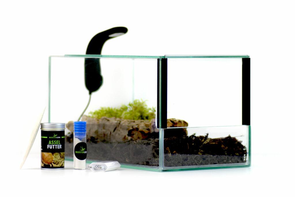 Insektenliebe Assel-Terrarium mit Lampe