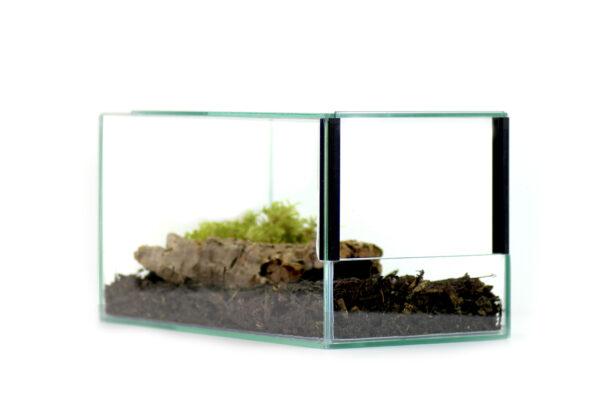 Insektenliebe Vogelspinnen + Skorpion Terrarium