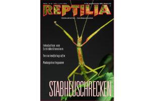 REPTILIA 24 Stabheuschrecken