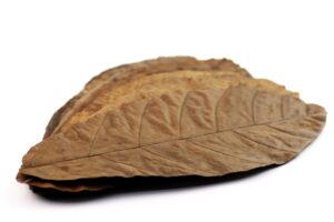 Cocoa leaves