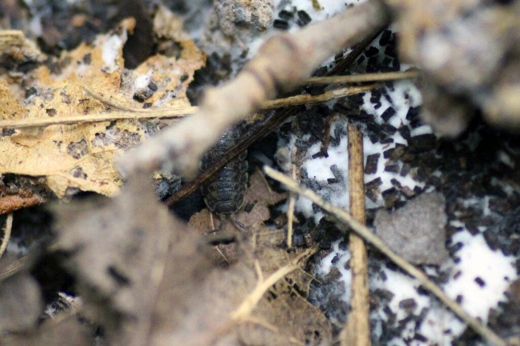 Assel Flake Soil
