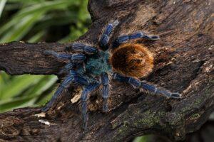 Alle Spinnen